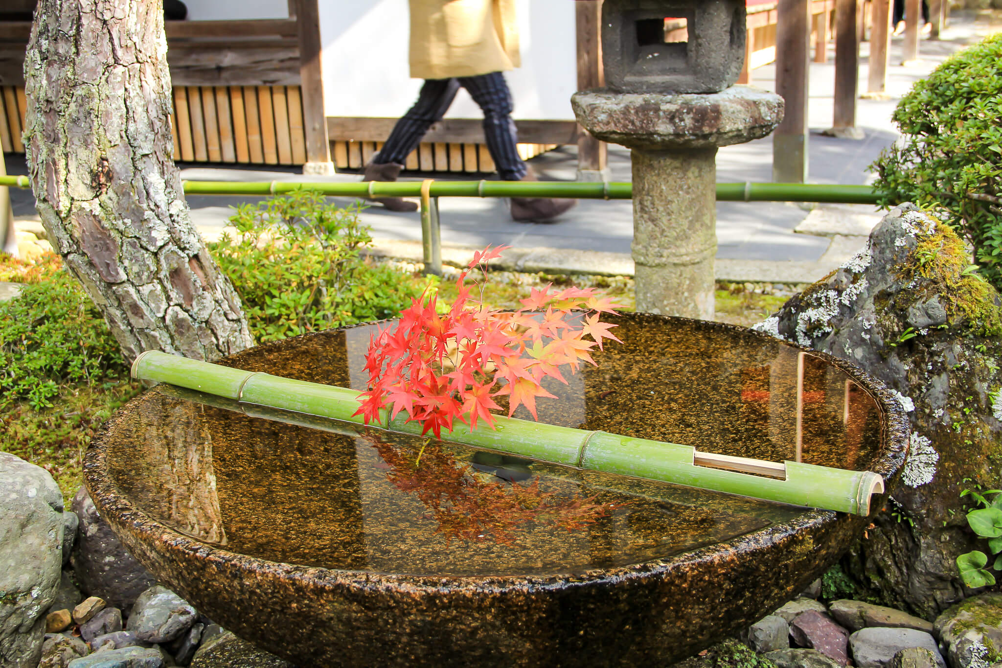 京都圓光寺の紅葉