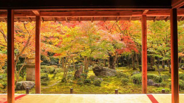 京都円光寺の紅葉