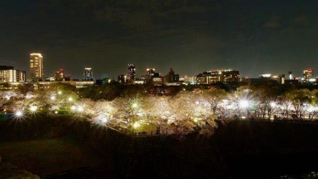 大阪城公園の桜のお花見