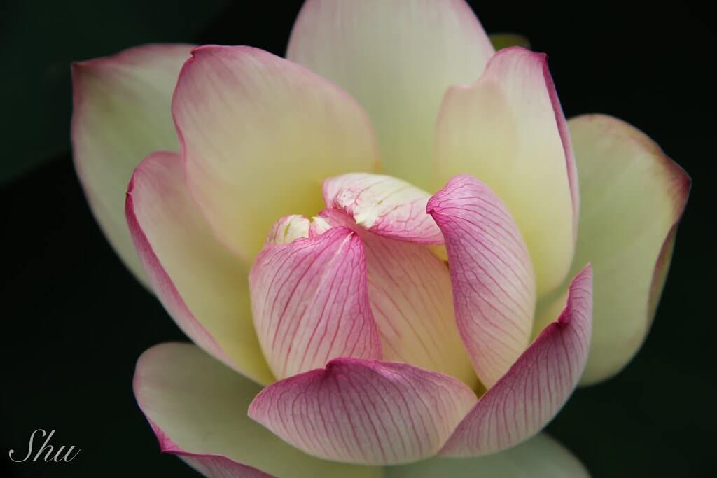 カメラで花をいつもより印象的に撮影するための簡単な4つのコツ!!