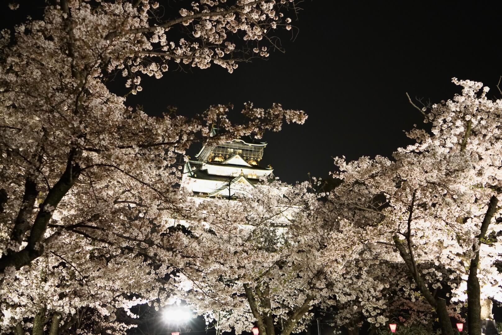 大阪城公園の夜桜ライトアップ