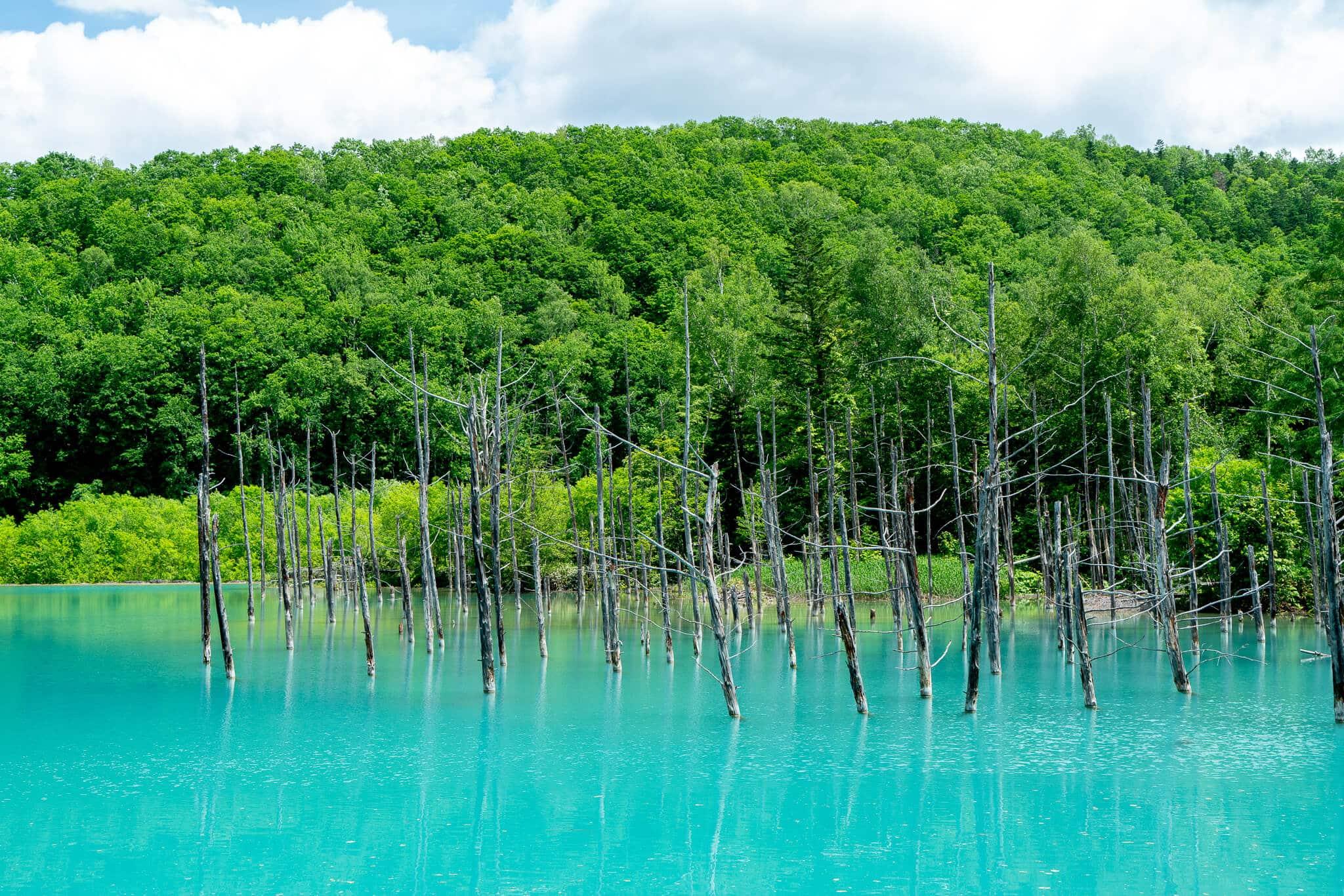 北海道の美瑛・富良野に行ったら絶対に行きたいスポット!青い池!