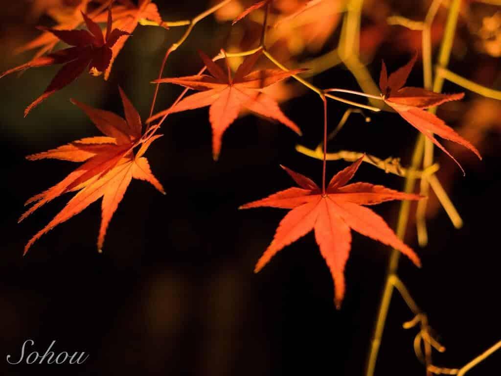 【京都】紅葉の名所!永観堂のライトアップ!