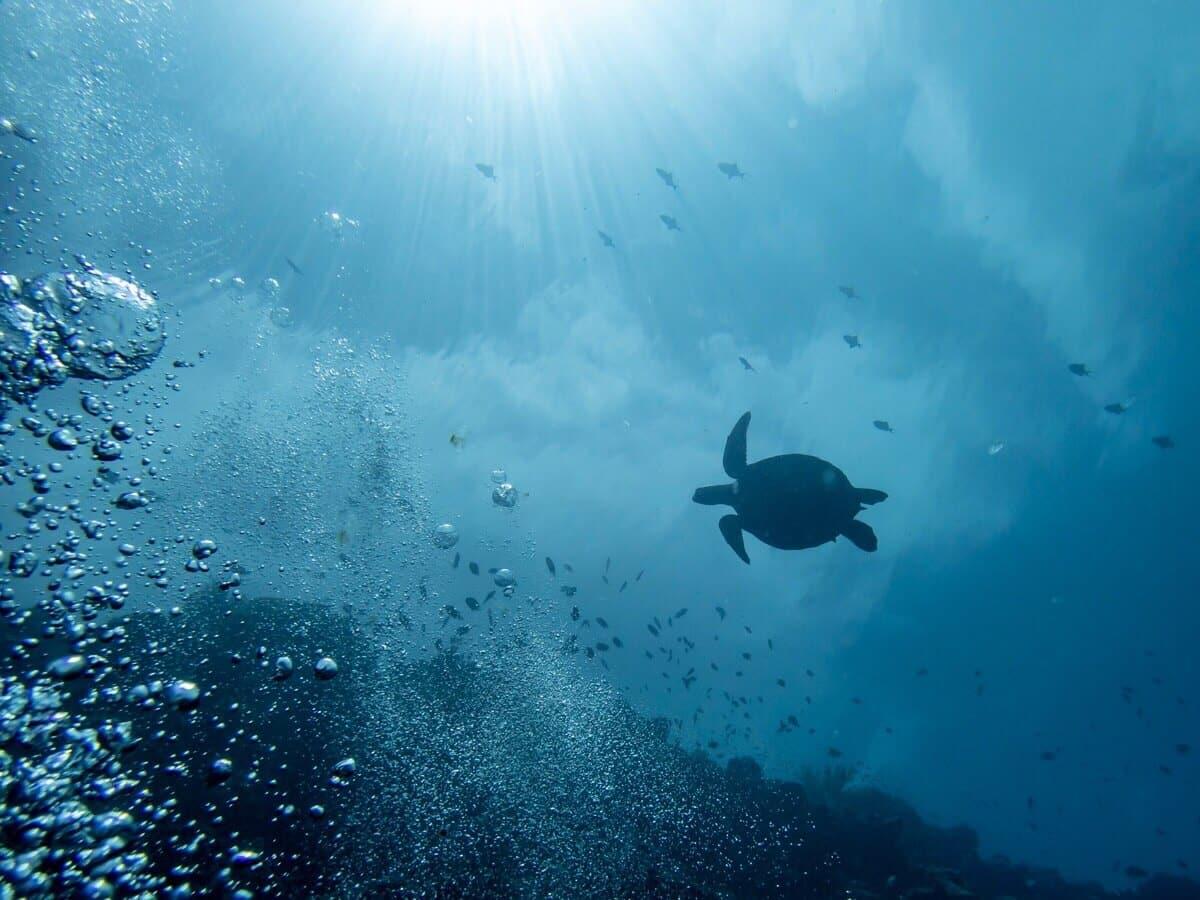 インドネシア・マナドでダイビング(2日目)ウミガメに会えた!