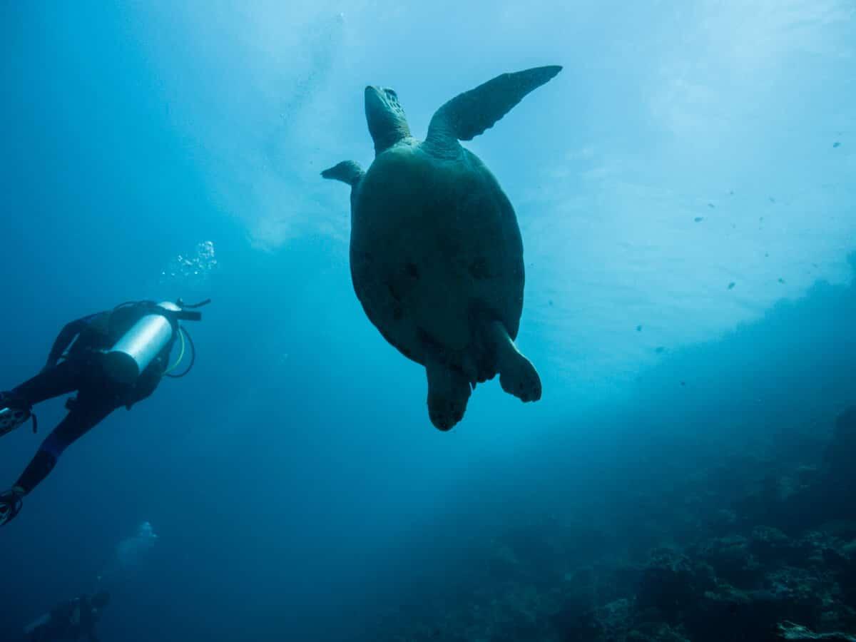 ウミガメ&イワシの大群が感動的!セブ島・モアルボアルでダイビング!